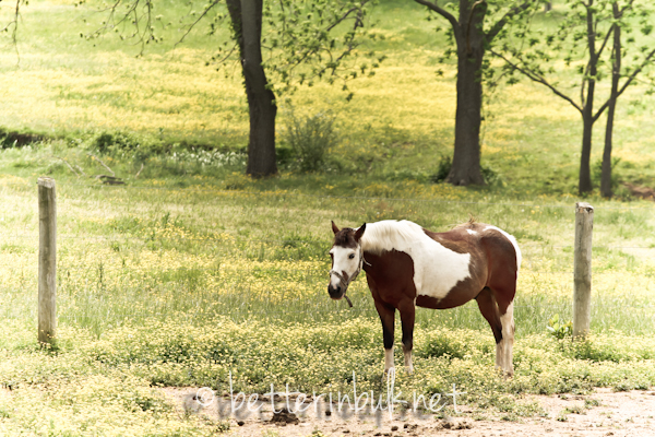 horse series spring love - photo #27