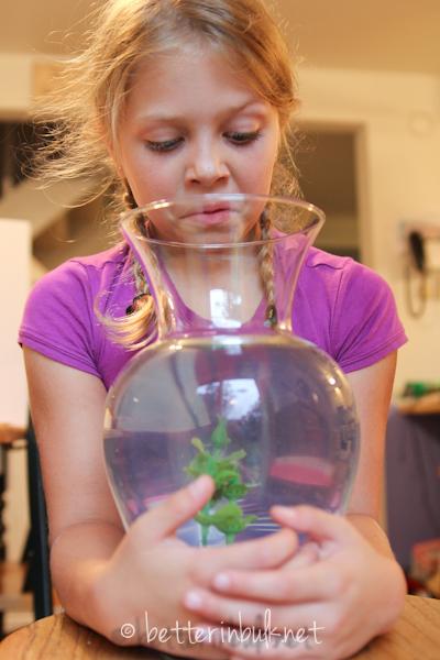 pet-sitting a goldfish