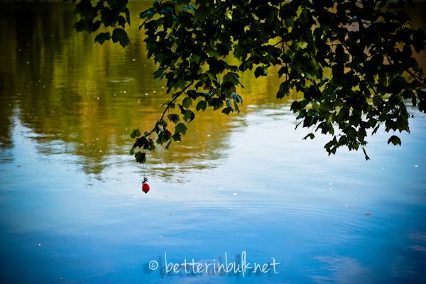 Lake nature photography