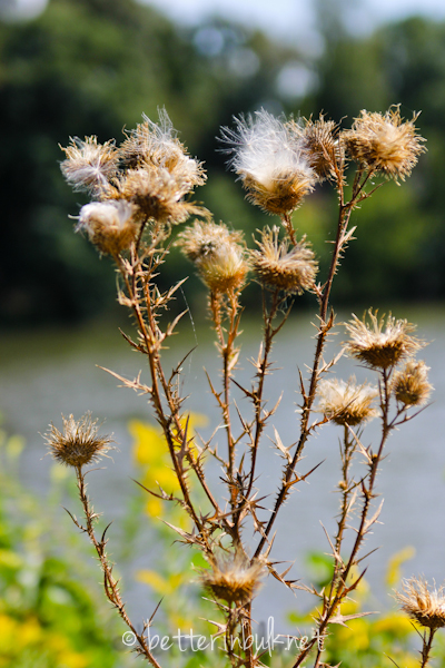 weeds near a lake - nature photography
