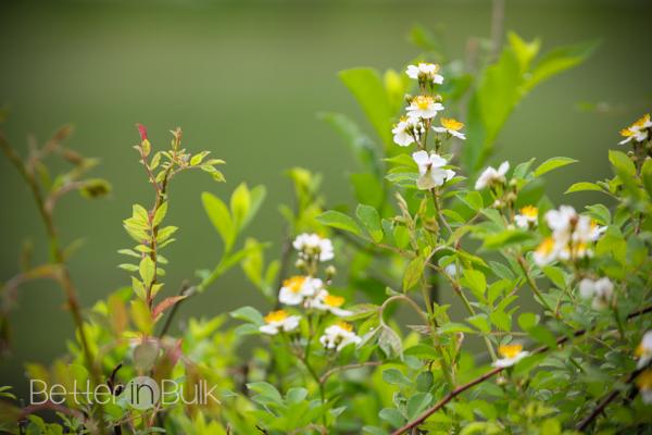 meadowside-5-2
