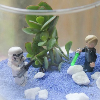 DIY Star Wars Terrarium Succulent Garden feature